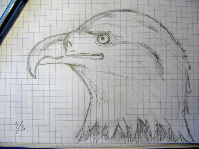 Pencil drawing of a bald eagle